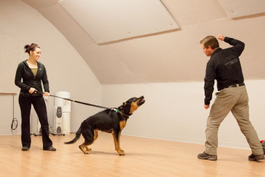 Cobra Canine Dogs For Personal Executive Protection Personal K9